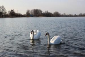 на Клецком озере